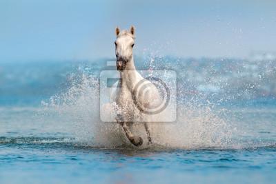 Naklejka Biały koń szybko biegać w błękitnej wodzie z pluśnięciem