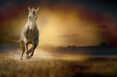 Biały koń w zachodzie słońca