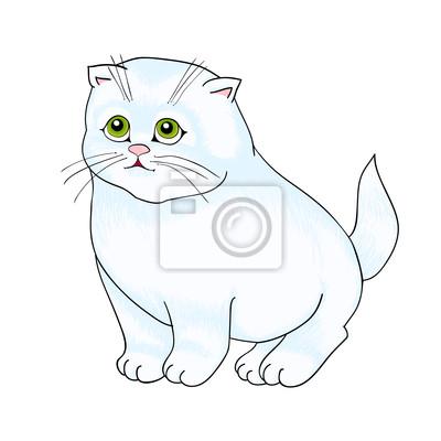 biały kot siedzi