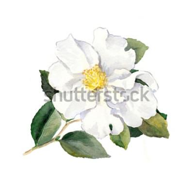 Naklejka Biały kwiat. Akwarela ilustracja botaniczna