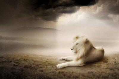 Biały lew na zachodzie słońca
