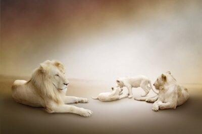 Biały lew rodzina