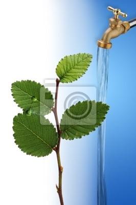 Bieżąca woda z kranu dla wzrostu nowej zielonej rośliny.