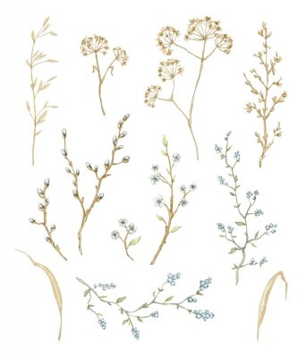 Naklejka Big set with dry herbs, willow branches and twigs with flowers and berries isolated on white background. Watercolor hand drawn illustration