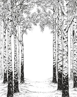 Birch forest, hand drawn illustration in vintage style with free space for your text.