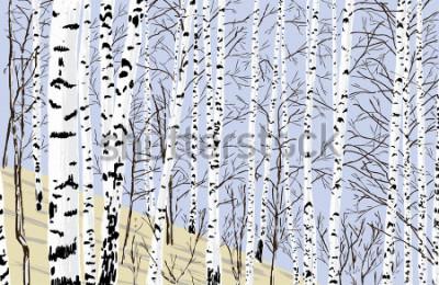 Naklejka birch grove in the spring