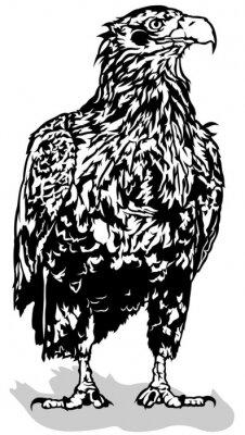 Naklejka Black and White Eagle - Kontury ilustracji wektorowych