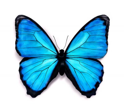 Naklejka Błękitny motyl