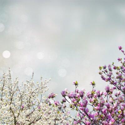 Naklejka Blooming drzewa magnolia