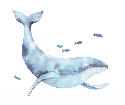 Naklejka Blue whale watercolor illustration isolated on white. Big wild underwater animal beautiful blue violet white watercolor whale ballena painting. Mammal marine or oceanic water animal swimming.