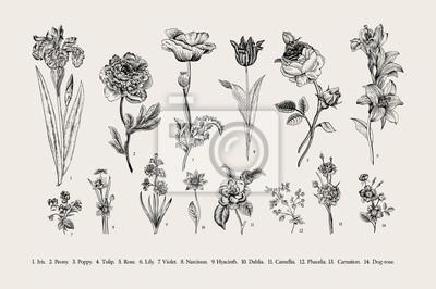 Botanika. Ustaw. Vintage kwiaty. Czarno-białych ilustracji w stylu rycin.