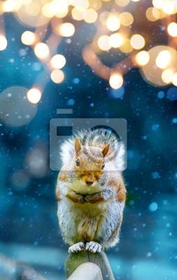 Boże Narodzenie transparent tło; śliczna wiewiórka w ogrodzie zimowym;