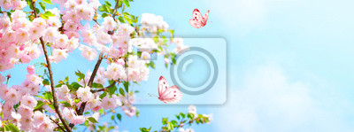 Naklejka Branches blossoming cherry on background blue sky, fluttering butterflies in spring on nature outdoors. Pink sakura flowers, amazing colorful dreamy romantic artistic image spring nature, copy space.