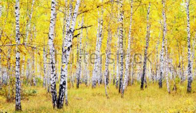Naklejka brzoza jesień las