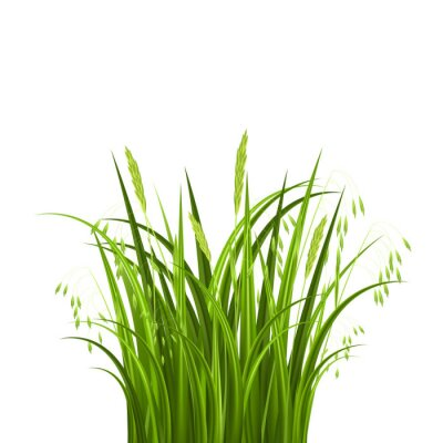 Naklejka Bush trawy na białym tle