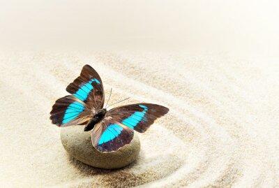 Naklejka Butterfly Prepona Laerte na piasku