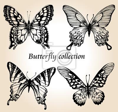 Butterfly set. Kolekcja owadów szkic do projektowania i scrapbooking, wektor wyciągnąć rękę sylwetkę, izolowane