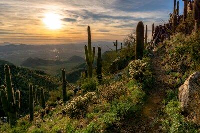 Naklejka Cactus Growing On Field Against Sky During Sunset