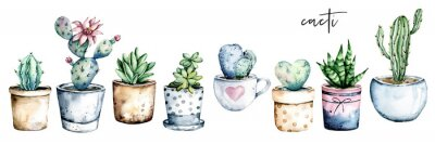 Naklejka Cactus potted, watercolor painting. Cacti, succulents set isolated on white. Perfectly for stickers, greeting design.