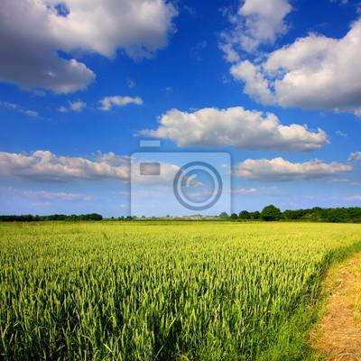 Campagne et ciel bleu