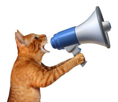 Naklejka Cat Announcement