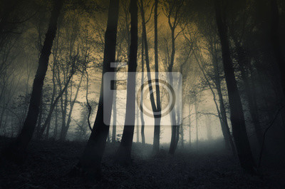 ciemne Spooky lasu