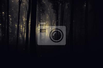 ciemne straszne lasy w nocy