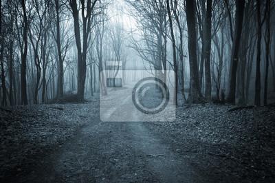ciemny las drogowego w nocy