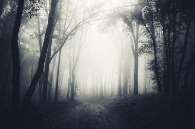ciemny las mgła