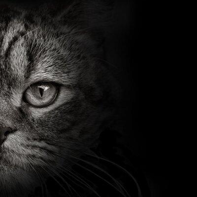 Naklejka ciemny pysk kota Close-up. przedni widok