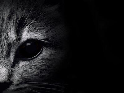 Naklejka ciemny pysk kota zbliżenie. przedni widok