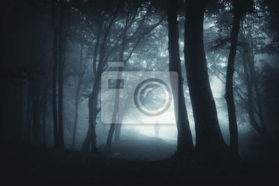 cień skradanie się w lesie