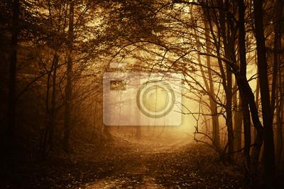 ciepłe światło padające na drogi w ciemnym lesie jesienią