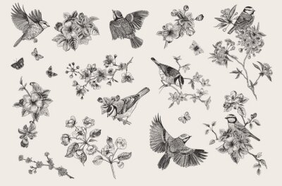 Classis vintage illustration. Blossom garden with tits. Birds and flowers. Set. Black and white