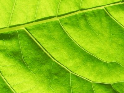 Close Up of green leaf texture with copy space for text or title