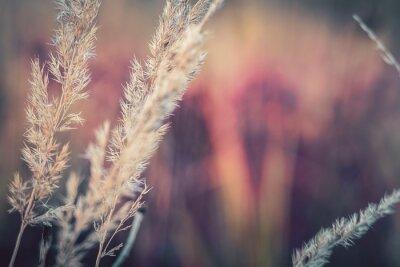 Naklejka Close-up Of Wheat Growing On Field