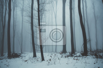 cold misty forest landscape in winter