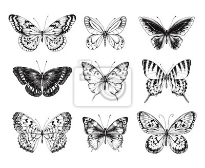 Collection of Hand Drawn black silhouette butterflies. Vector illustration in vintage style.