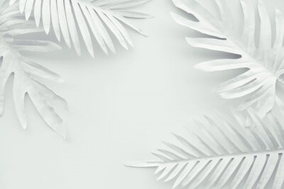 Naklejka Collection of tropical leaves,foliage plant in white color with space background.Abstract leaf decoration design.Exotic nature art
