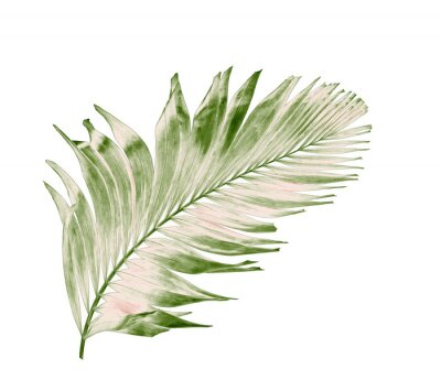 Naklejka concept summer with green palm leaf from tropical . frond floral leaves branches tree isolated on white pattern background. flat lay, top view.