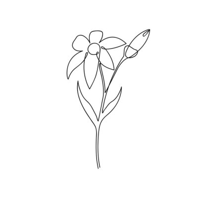 Continuous line of lily flower. Lily one line drawing. Hand-drawn minimalist illustration. Vector.