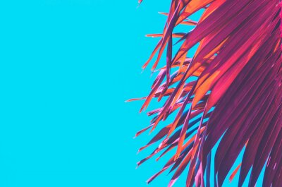 Naklejka Copy space pink tropical palm tree on sky abstract background. Summer vacation and nature travel adventure concept.