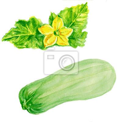 Naklejka cukinia szpiku, cukinia kwiat Akwarele ilustracji