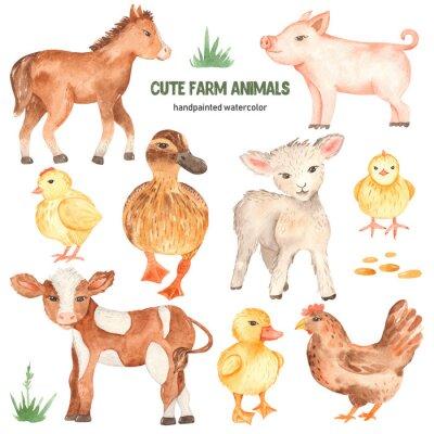 Naklejka Cute farm animals horse, pig, lamb, calf, duck, duckling, watercolor chick