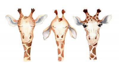 Naklejka Cute giraffe cartoon watercolor illustration animal set