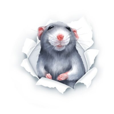 Naklejka Cute gray cartoon rat, paper breakthrough, digital painting