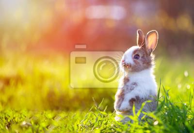 Naklejka Cute little bunny in grass with ears up looking away