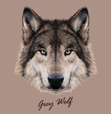 Naklejka Cyfrowe ilustracji wektorowych Portret Wolf.