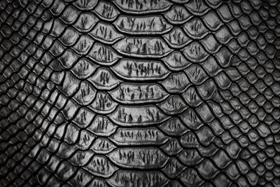Naklejka Czarna skóra węża wzór tekstury