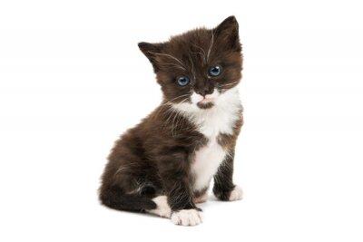 Naklejka czarno-biały kotek izolowana